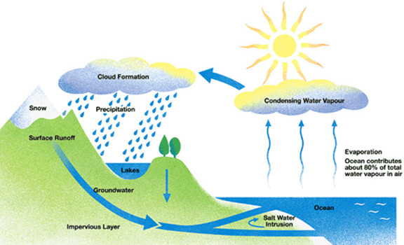 Worksheets Water Cycle Diagram For 5th Grade gainesvilleocalahigh springs water softenerstreatment blog